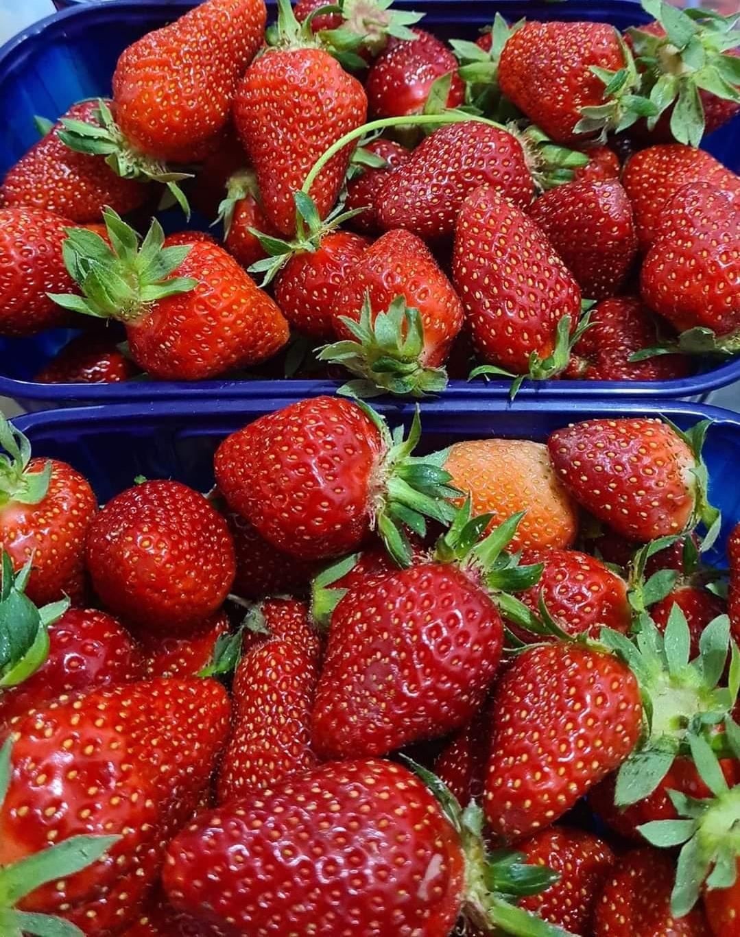 Croatian Strawberries from Vrgorac