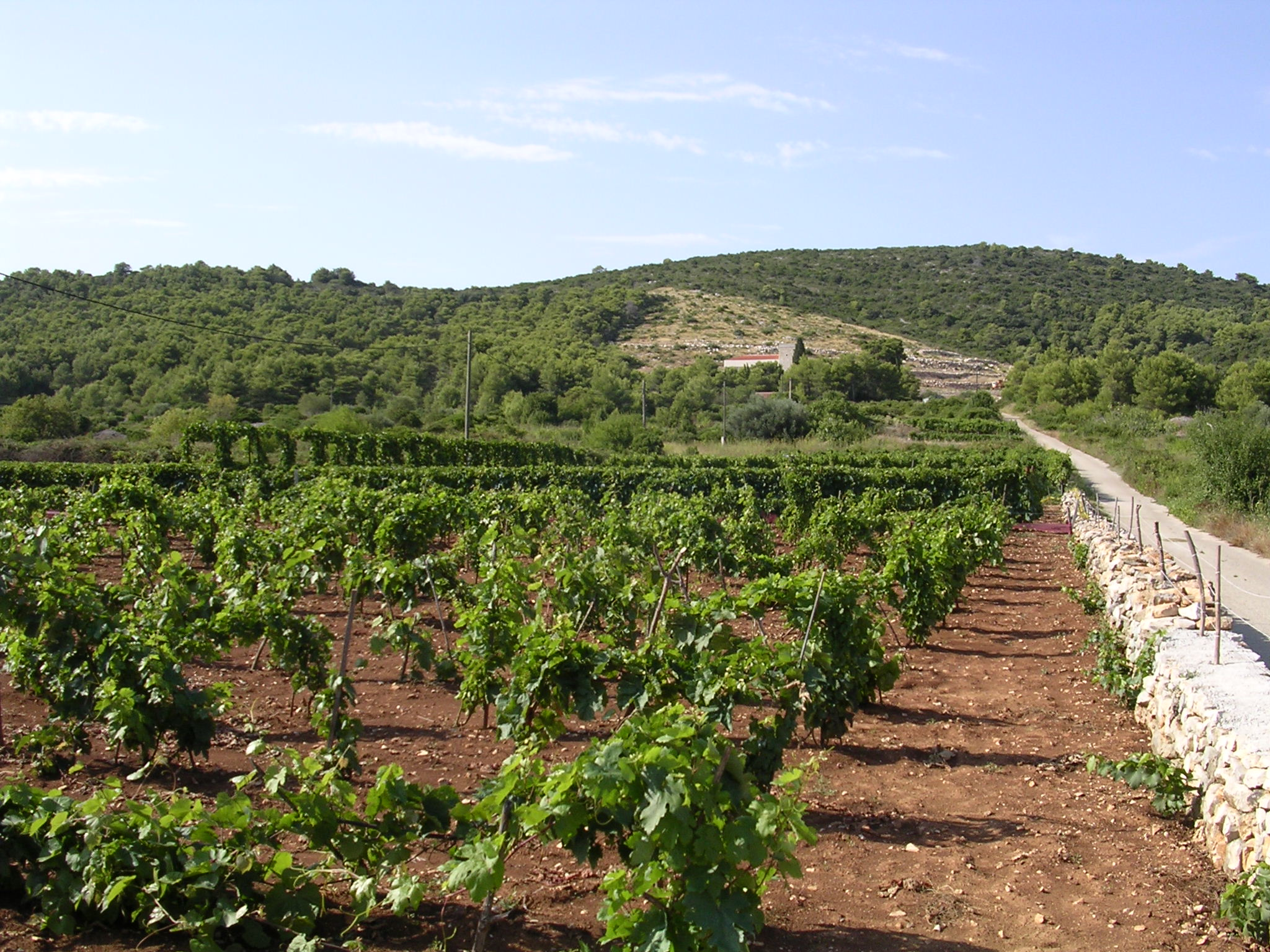 Vis vineyards