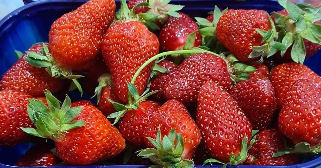Croatian strawberries